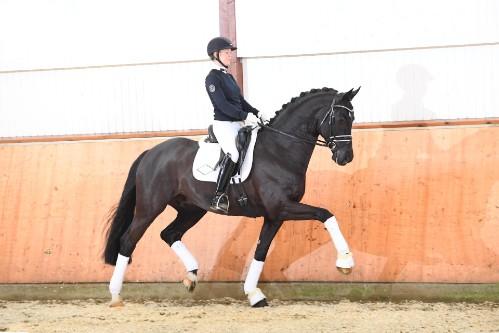 Bildresultat för bon coeur stallion